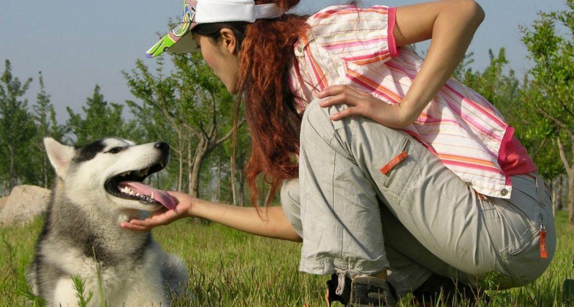 החבר הטוב של האדם בתפקיד המטפל – על כלבנות טיפולית